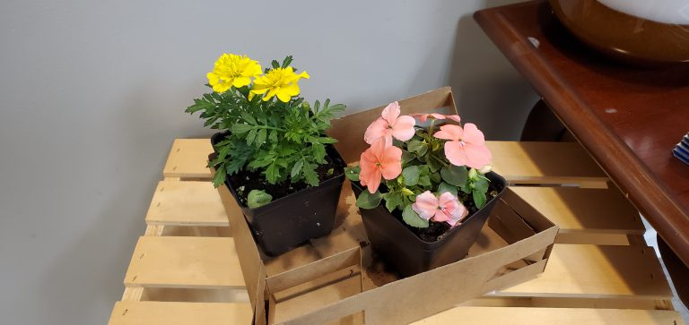 Mother's Day Flowers Giveaway